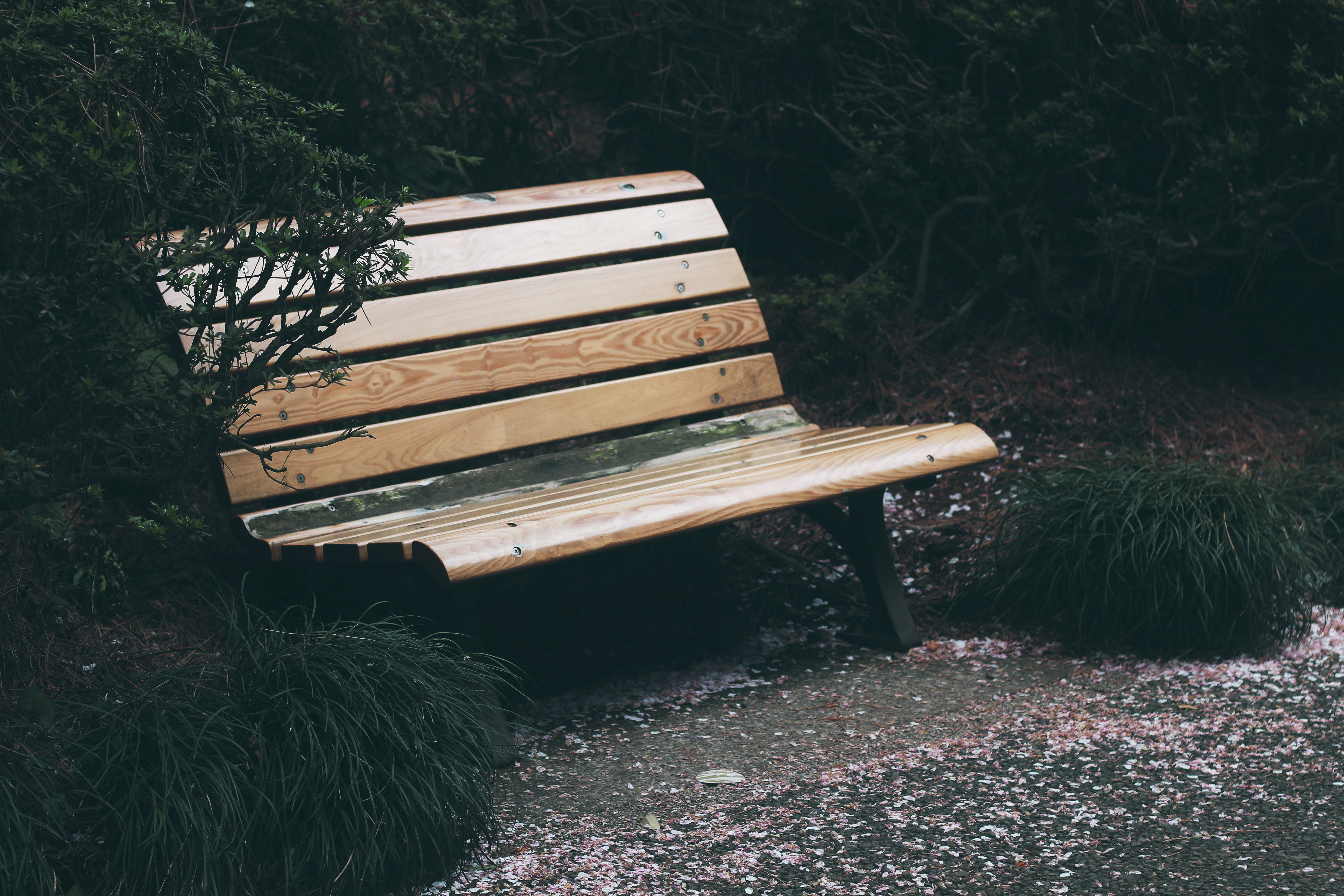 74748 Screensavers and Wallpapers Bench for phone. Download Nature, Trees, Park, Foliage, Bench pictures for free
