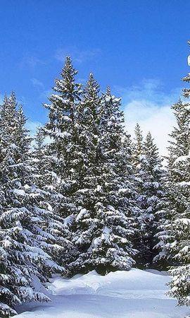 19893 скачать обои Пейзаж, Зима, Деревья, Снег, Елки - заставки и картинки бесплатно