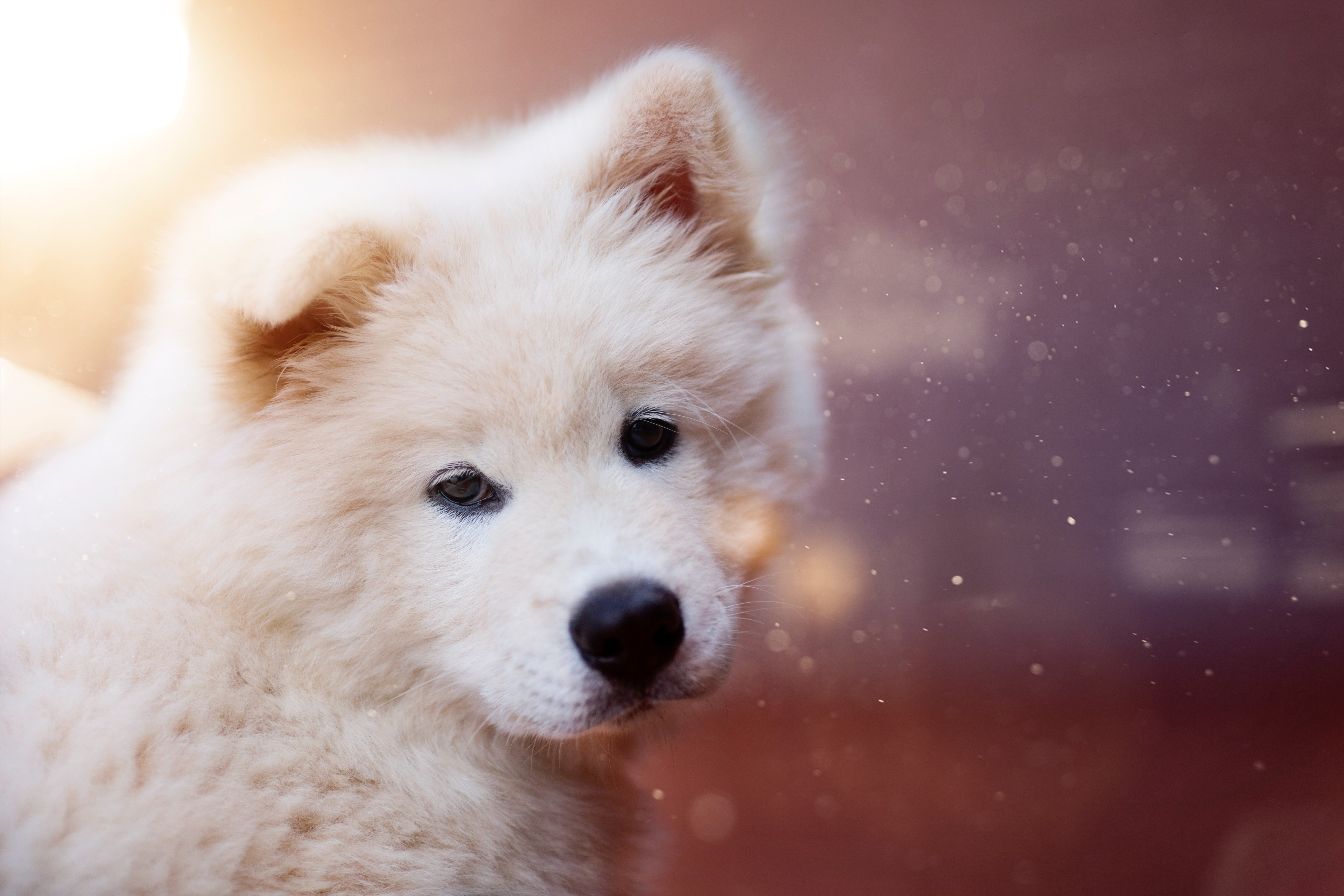 120881 Screensavers and Wallpapers Puppy for phone. Download Animals, Fluffy, Dog, Nice, Sweetheart, Puppy pictures for free