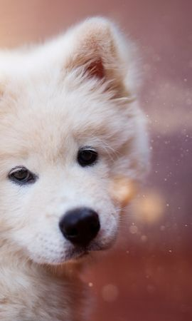 120881 download wallpaper Animals, Puppy, Dog, Fluffy, Nice, Sweetheart screensavers and pictures for free