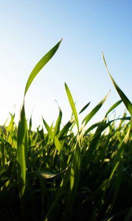 26424 скачать обои Растения, Пейзаж, Трава, Поля, Солнце - заставки и картинки бесплатно