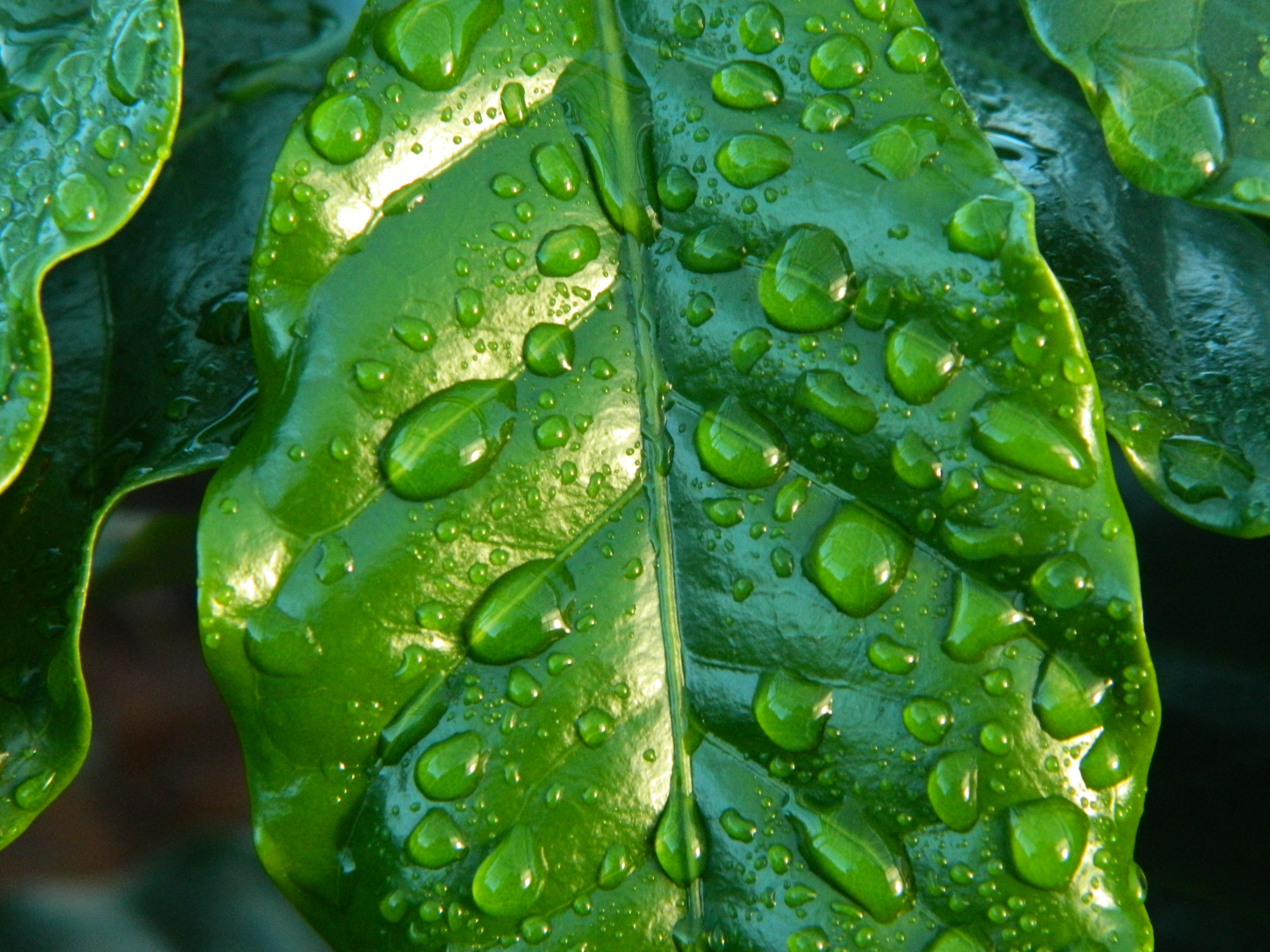 52167 Screensavers and Wallpapers Drops for phone. Download Drops, Macro, Surface, Sheet, Leaf pictures for free