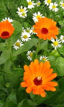 8896 скачать обои Растения, Цветы - заставки и картинки бесплатно