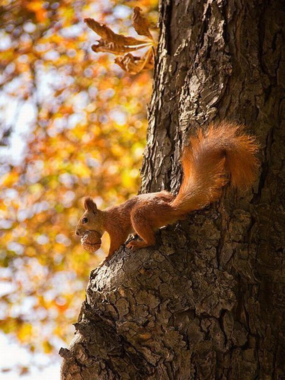 Handy-Wallpaper Tiere, Eichhörnchen kostenlos herunterladen.