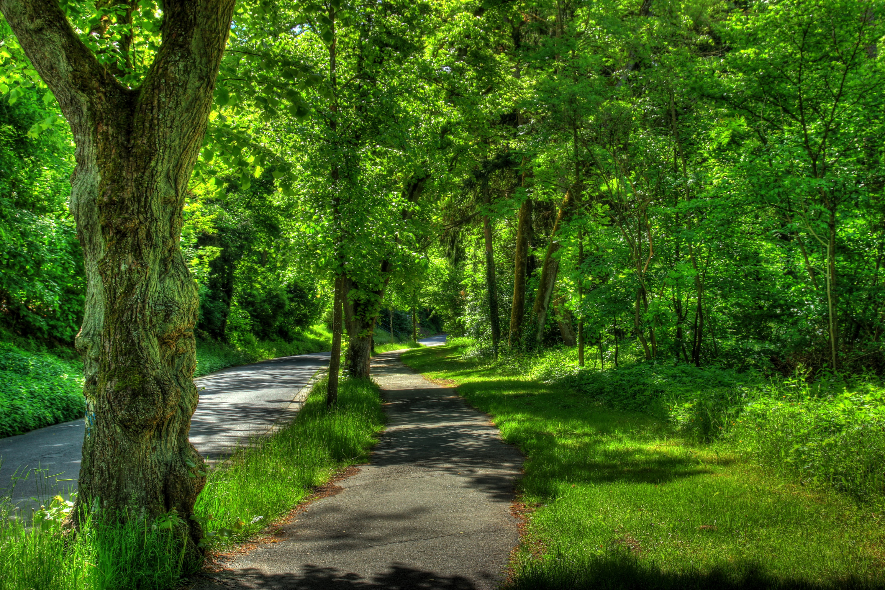 86835 Screensavers and Wallpapers Summer for phone. Download Nature, Trees, Summer, Park, Hdr, Germany, Wetzlar pictures for free