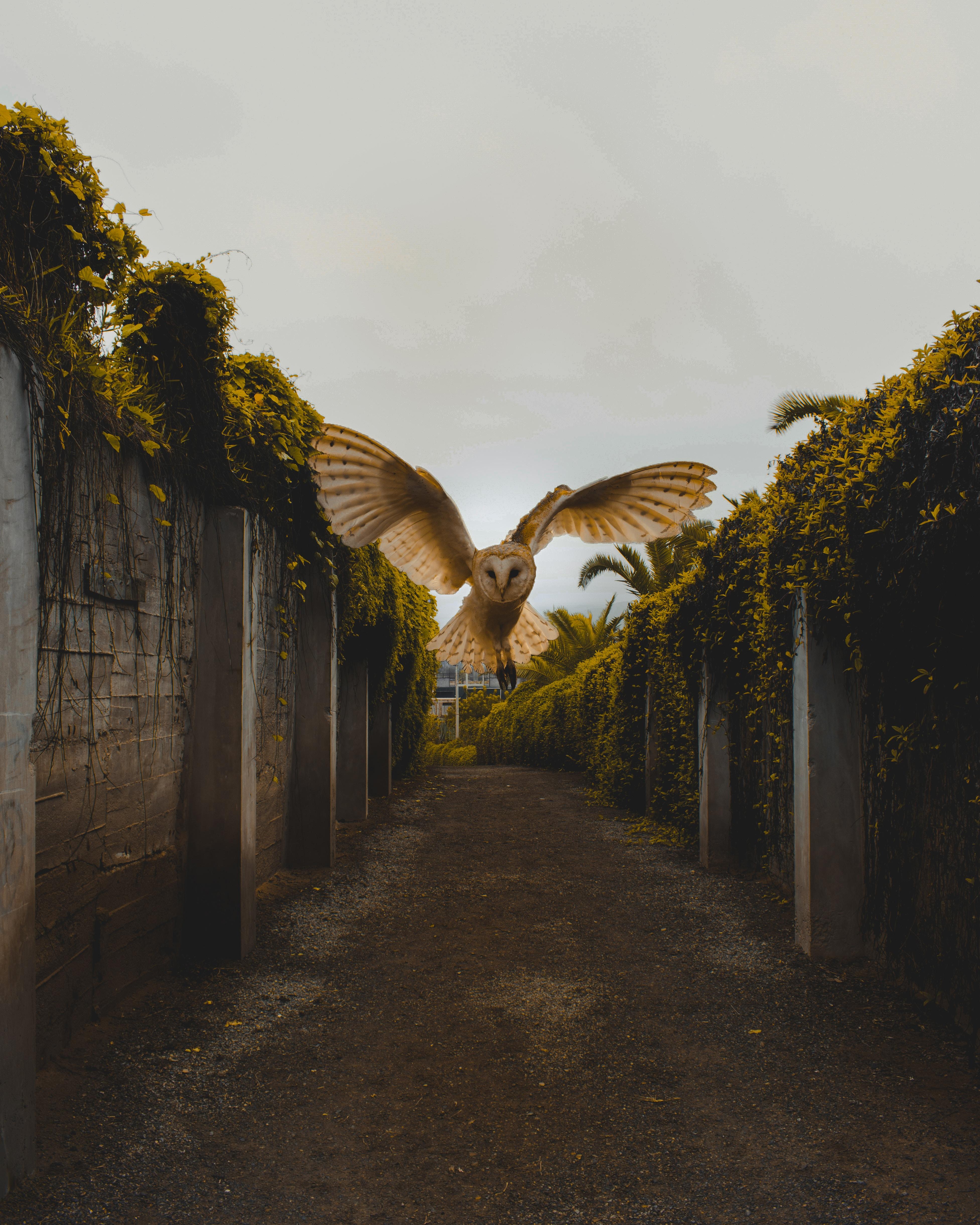 114730 Hintergrundbild herunterladen Eule, Tiere, Fliegen, Vogel, Flug, Flügel - Bildschirmschoner und Bilder kostenlos