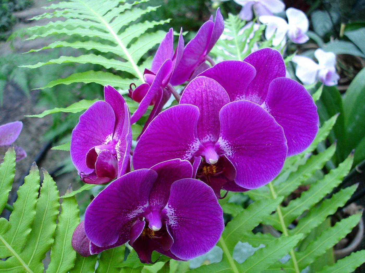 29539 скачать Фиолетовые обои на телефон бесплатно, Растения, Цветы Фиолетовые картинки и заставки на мобильный