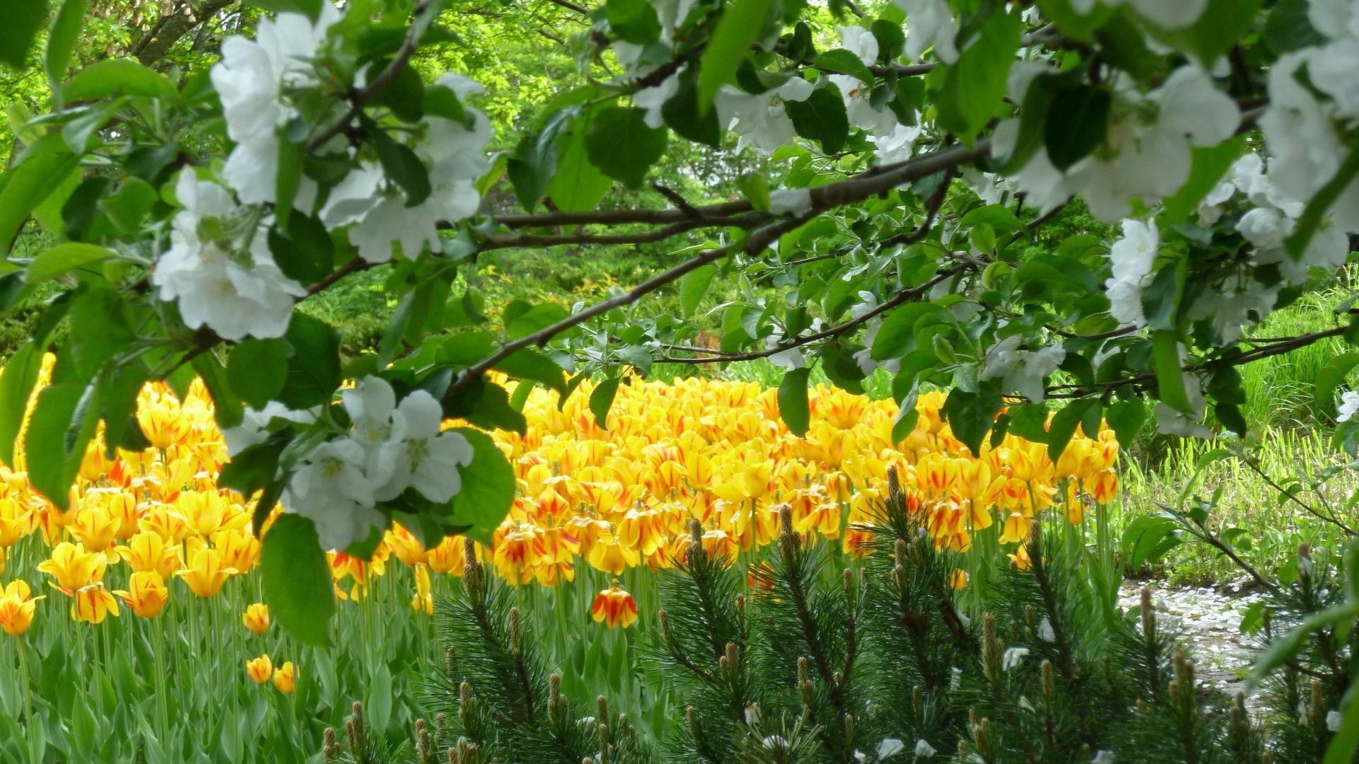 142922 Hintergrundbild herunterladen Natur, Blumen, Tulpen, Holz, Baum, Garten, Frühling - Bildschirmschoner und Bilder kostenlos