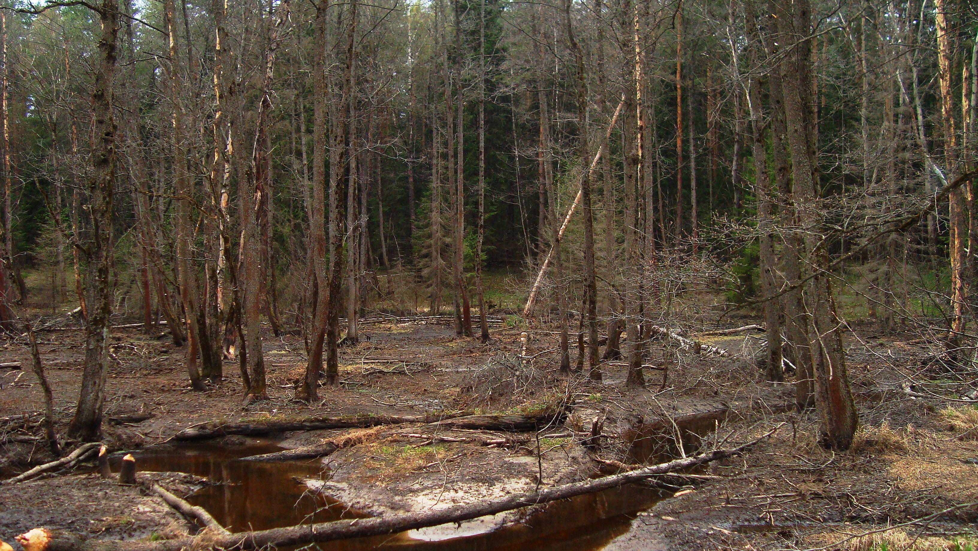 119536 скачать обои Природа, Лес, Река, Деревья, Голые, Уныние, Серость, Осень, Холод, Сырость - заставки и картинки бесплатно