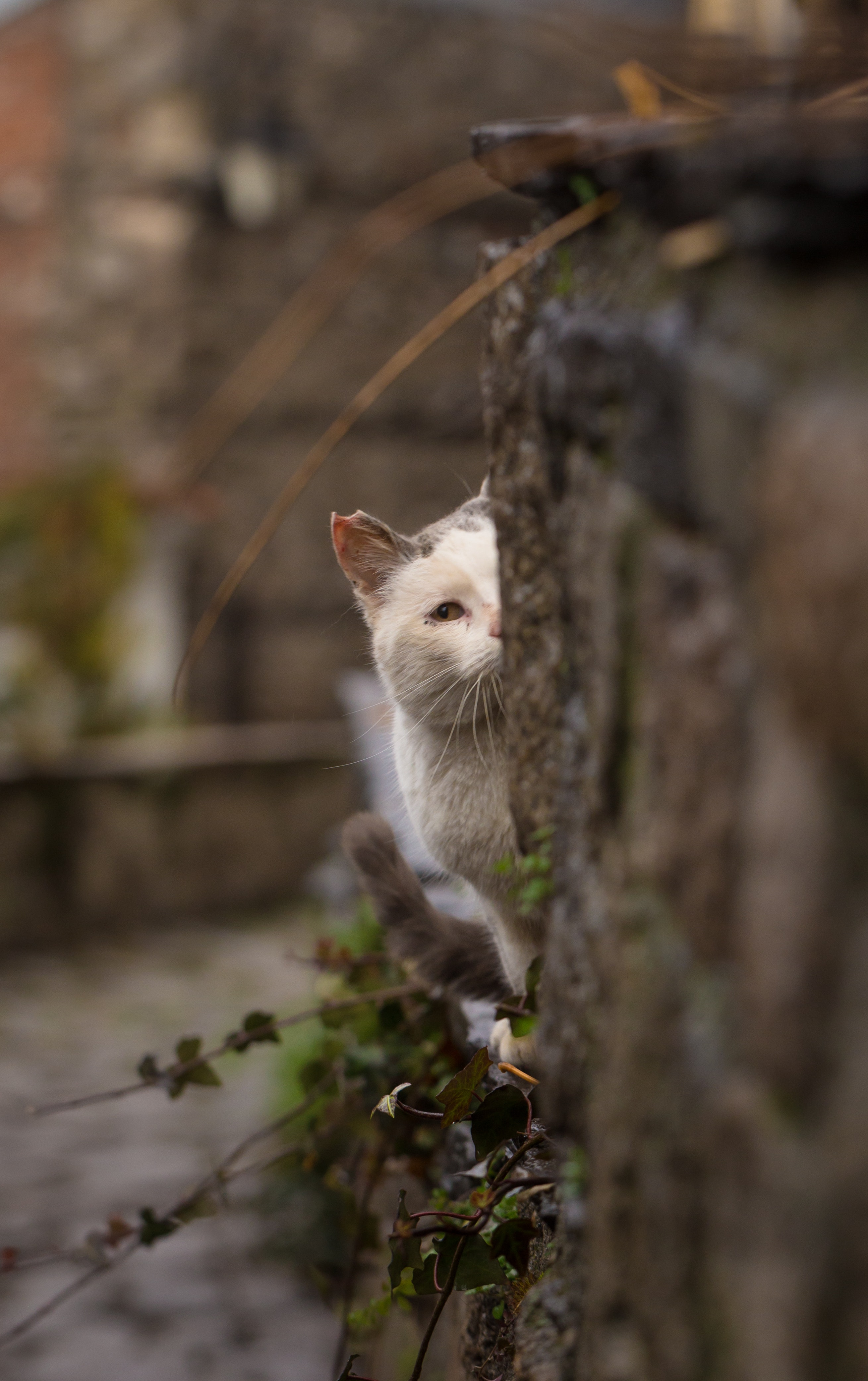 94765 download wallpaper Animals, Cat, Peek Out, Look Out, Hide, Blur, Smooth screensavers and pictures for free
