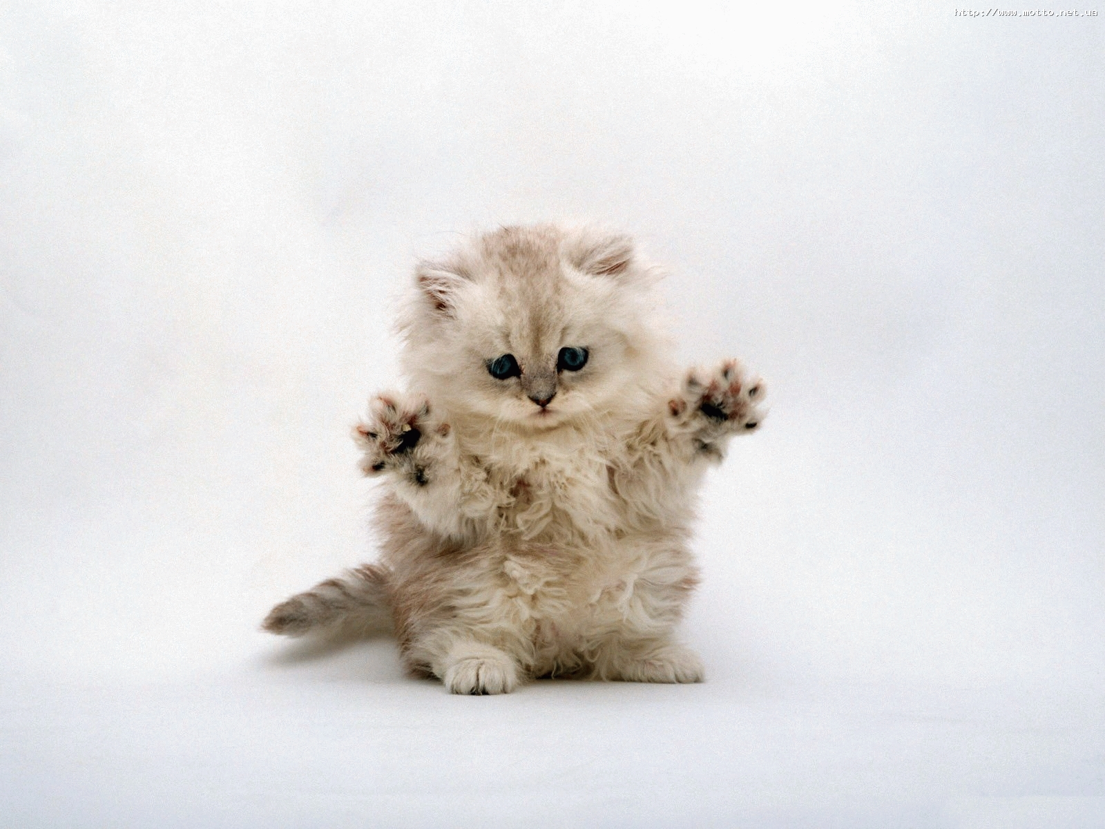 861 скачать обои Кошки (Коты, Котики), Животные - заставки и картинки бесплатно