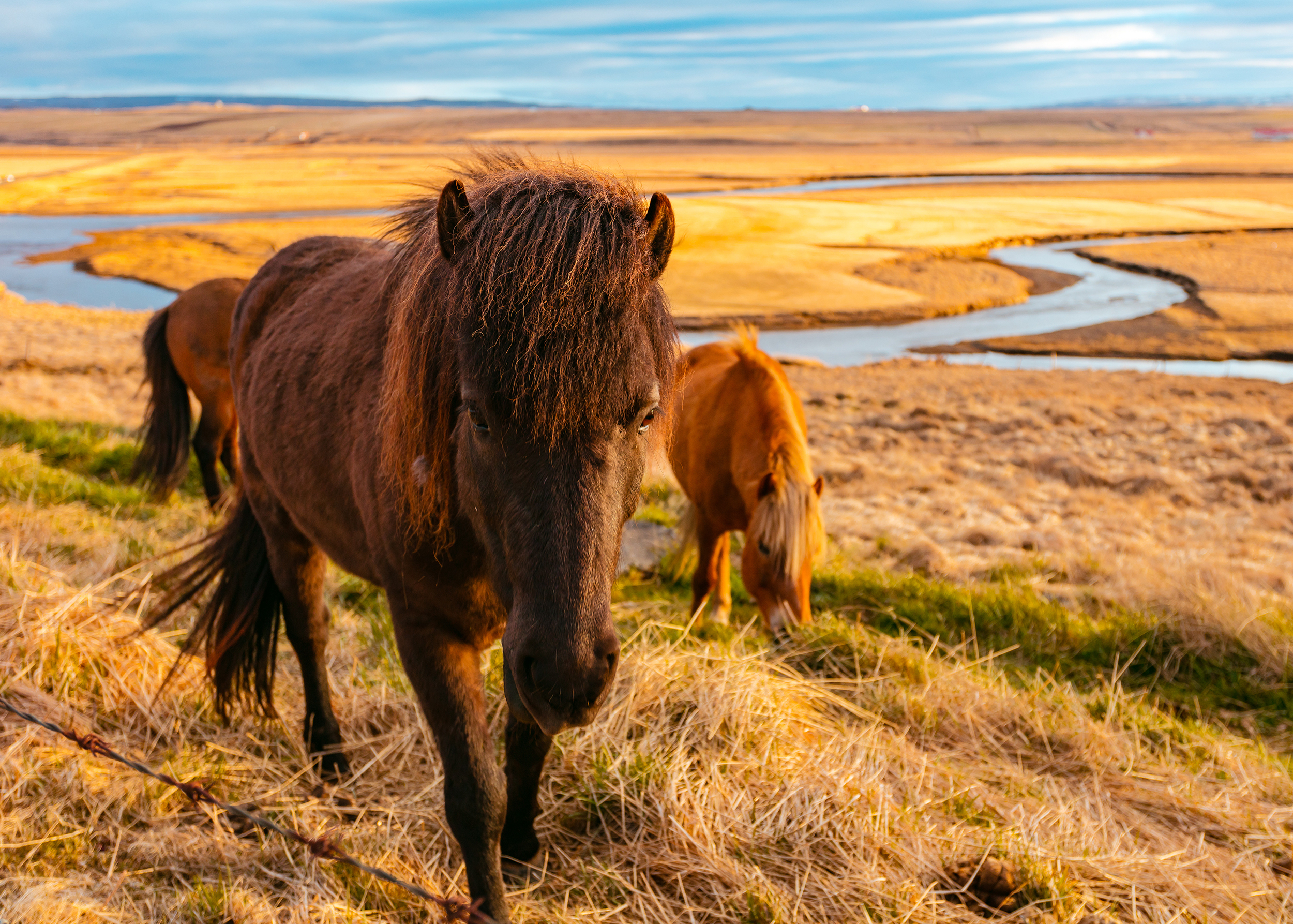 146048 download wallpaper Animals, Horses, Grass, Field screensavers and pictures for free