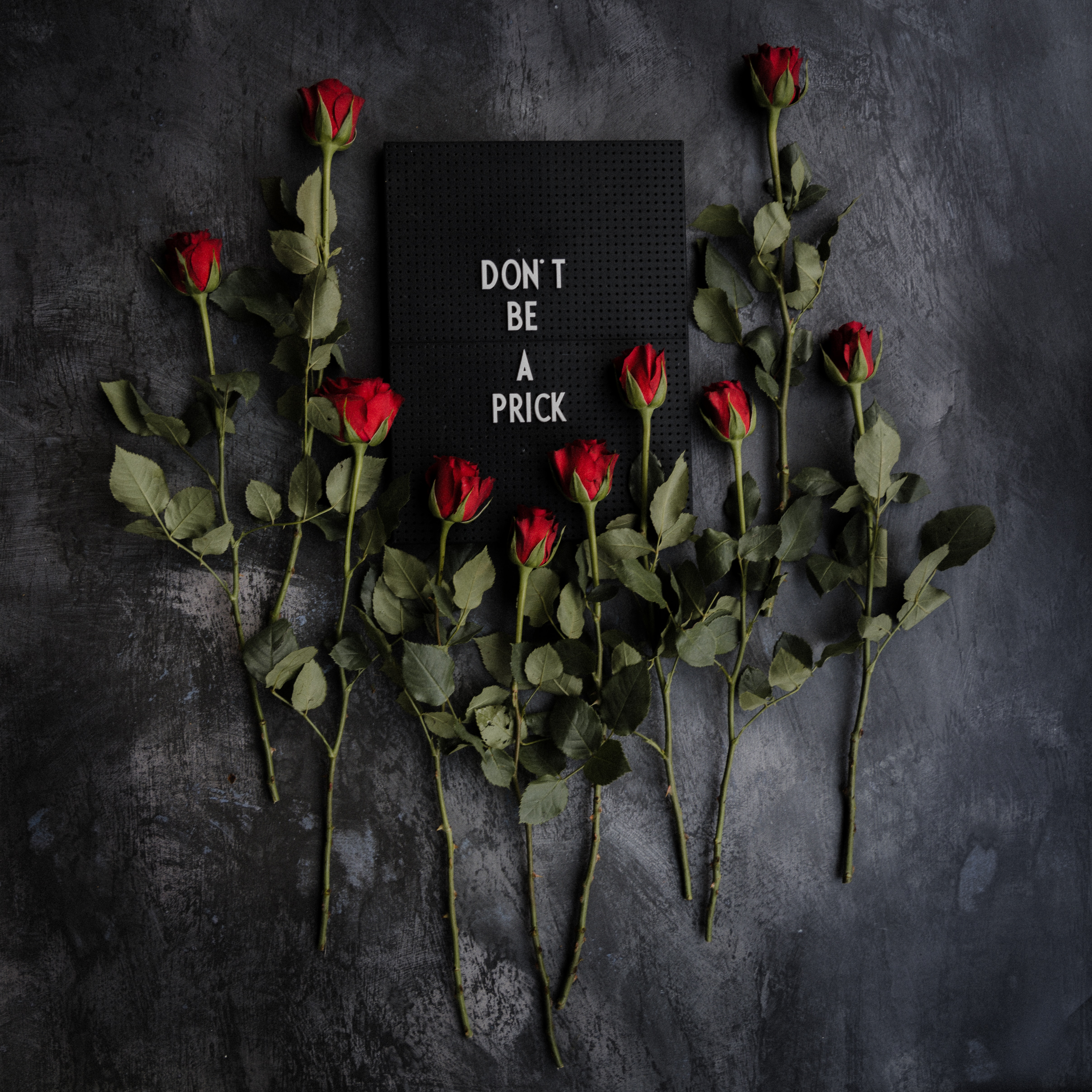 70616 free wallpaper 360x640 for phone, download images Words, Flowers, Roses, Inscription, Nameplate, Plate, Motivation 360x640 for mobile