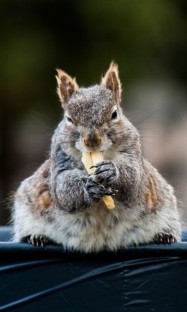 130420 Screensavers and Wallpapers Funny for phone. Download Animals, Squirrel, Funny, Nice, Sweetheart, Animal, Food pictures for free