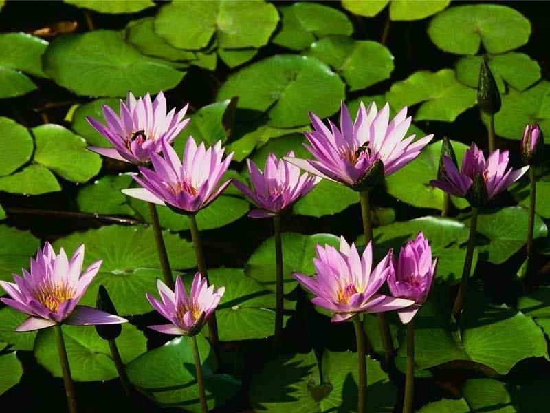 50012 скачать обои Растения, Цветы - заставки и картинки бесплатно