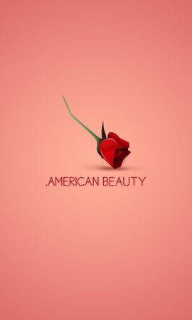 24915 скачать обои Цветы, Фон, Розы - заставки и картинки бесплатно