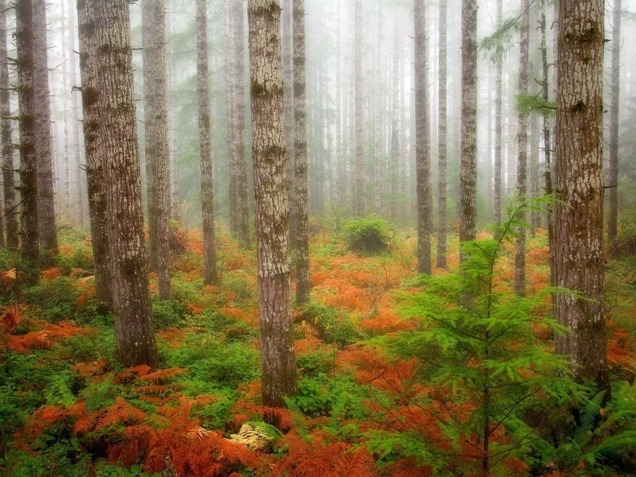 29459 download wallpaper Landscape, Trees, Autumn screensavers and pictures for free
