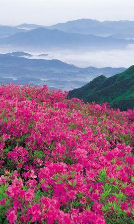 41084 télécharger le fond d'écran Paysage, Fleurs, Montagnes - économiseurs d'écran et images gratuitement