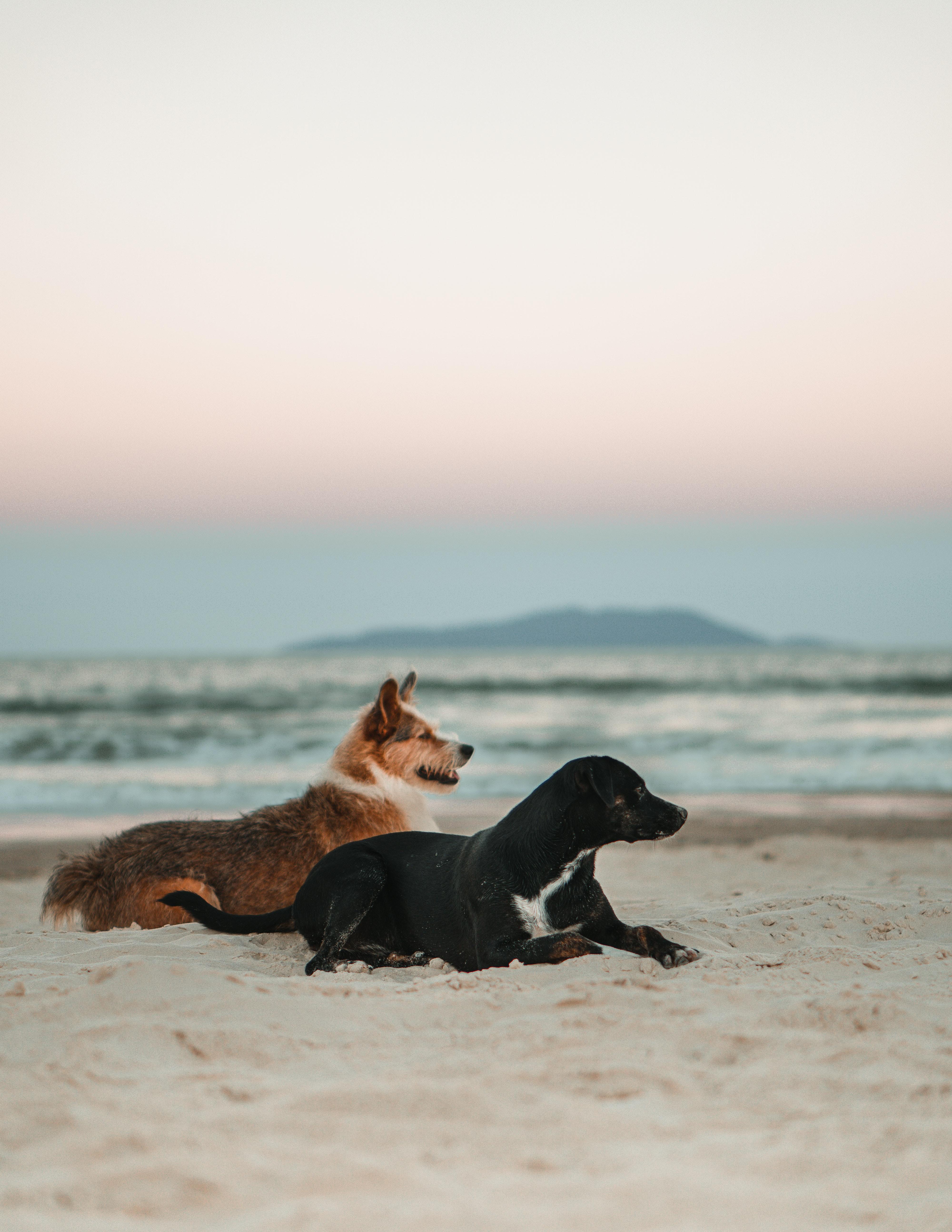 74621 descargar fondo de pantalla Animales, Perros, Mascotas, Playa: protectores de pantalla e imágenes gratis