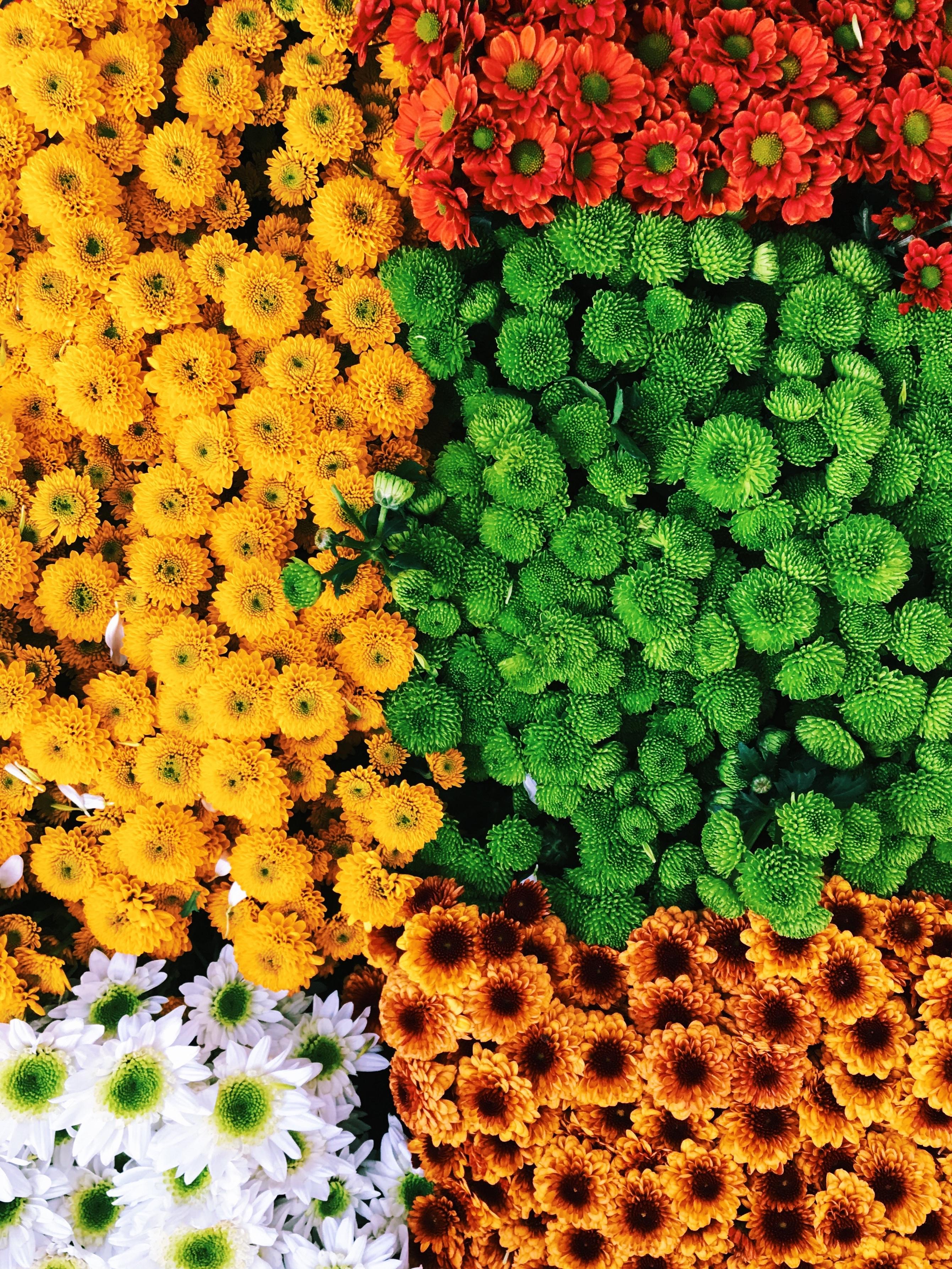 123149 télécharger le fond d'écran Fleurs, Composition, Multicolore, Hétéroclite, Bouquets - économiseurs d'écran et images gratuitement