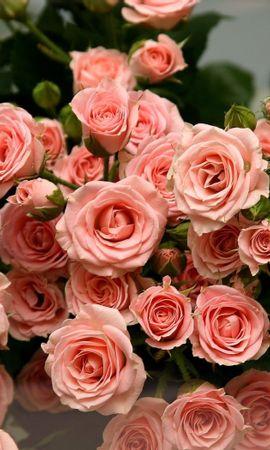40665 descargar fondo de pantalla Plantas, Flores, Roses: protectores de pantalla e imágenes gratis
