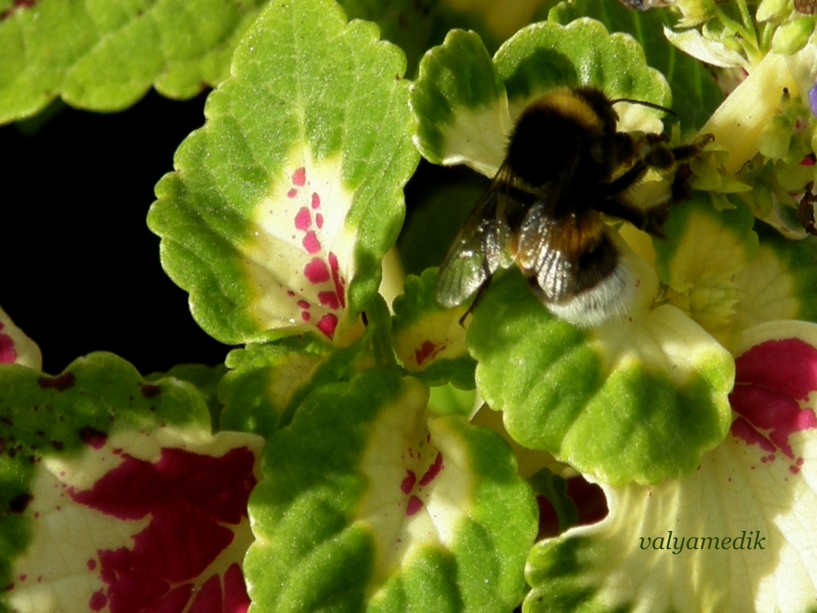 5458 Screensavers and Wallpapers Bees for phone. Download Insects, Bees pictures for free