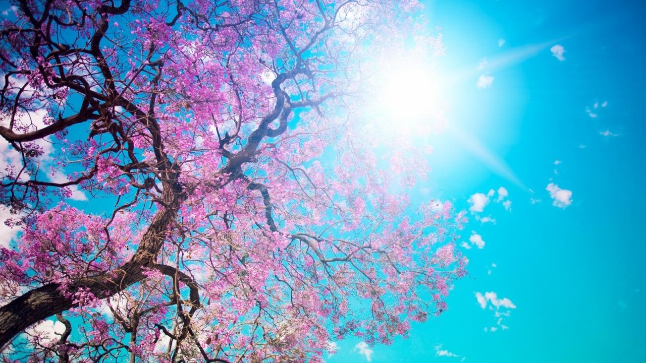 48750 скачать обои Растения, Пейзаж, Природа, Деревья, Солнце - заставки и картинки бесплатно