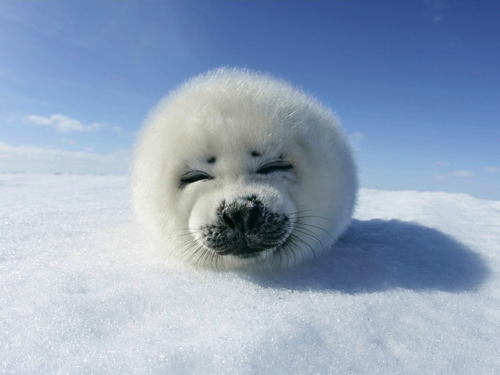 933 download wallpaper Animals, Winter, Snow screensavers and pictures for free