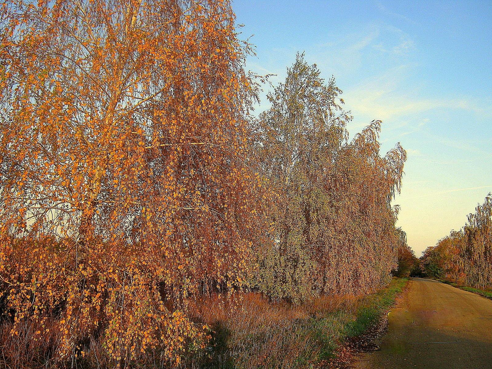 10160 скачать обои Пейзаж, Деревья, Дороги, Осень - заставки и картинки бесплатно
