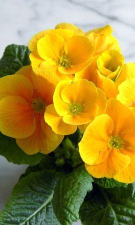 1153 Заставки і шпалери Фіалки на телефон. Завантажити Рослини, Квіти, Фіалки картинки безкоштовно