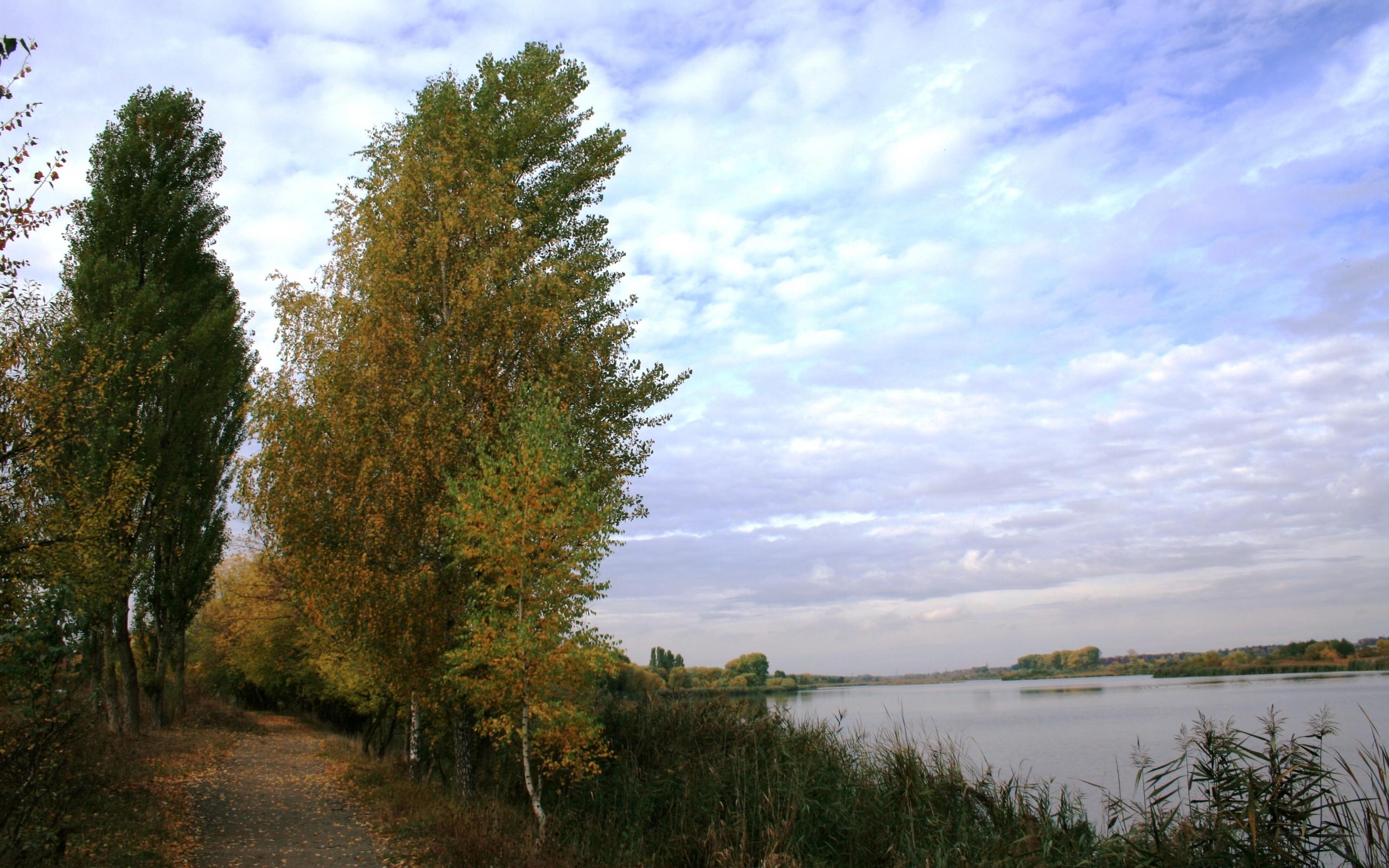 8885 скачать обои Пейзаж, Деревья - заставки и картинки бесплатно