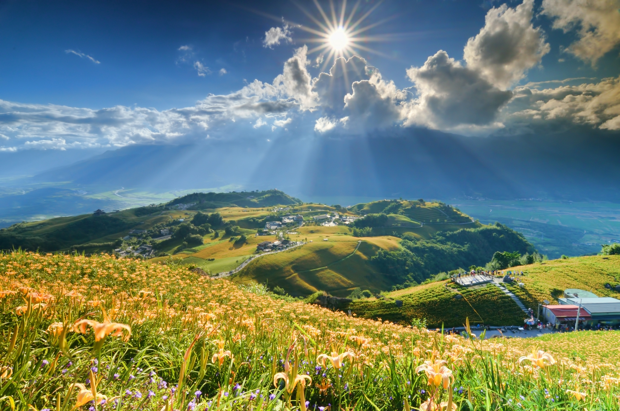 66552 download wallpaper Nature, Flowers, Mountains, Sun, Clouds, Lilies, Beams, Rays, Slope screensavers and pictures for free