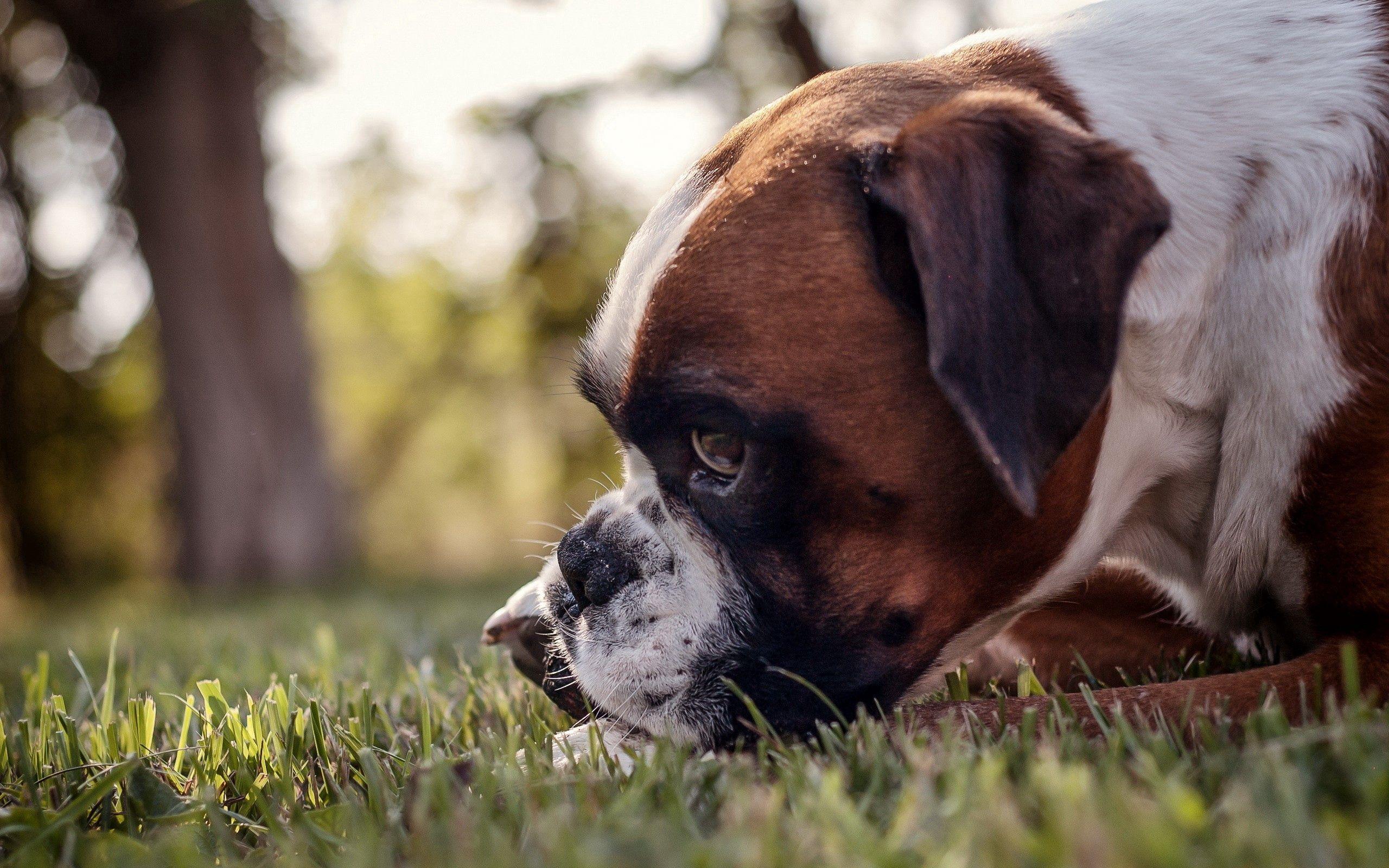 138654 скачать обои Животные, Собака, Морда, Профиль, Трава - заставки и картинки бесплатно