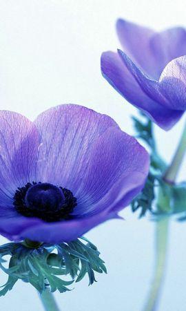 8347 скачать обои Растения, Цветы - заставки и картинки бесплатно