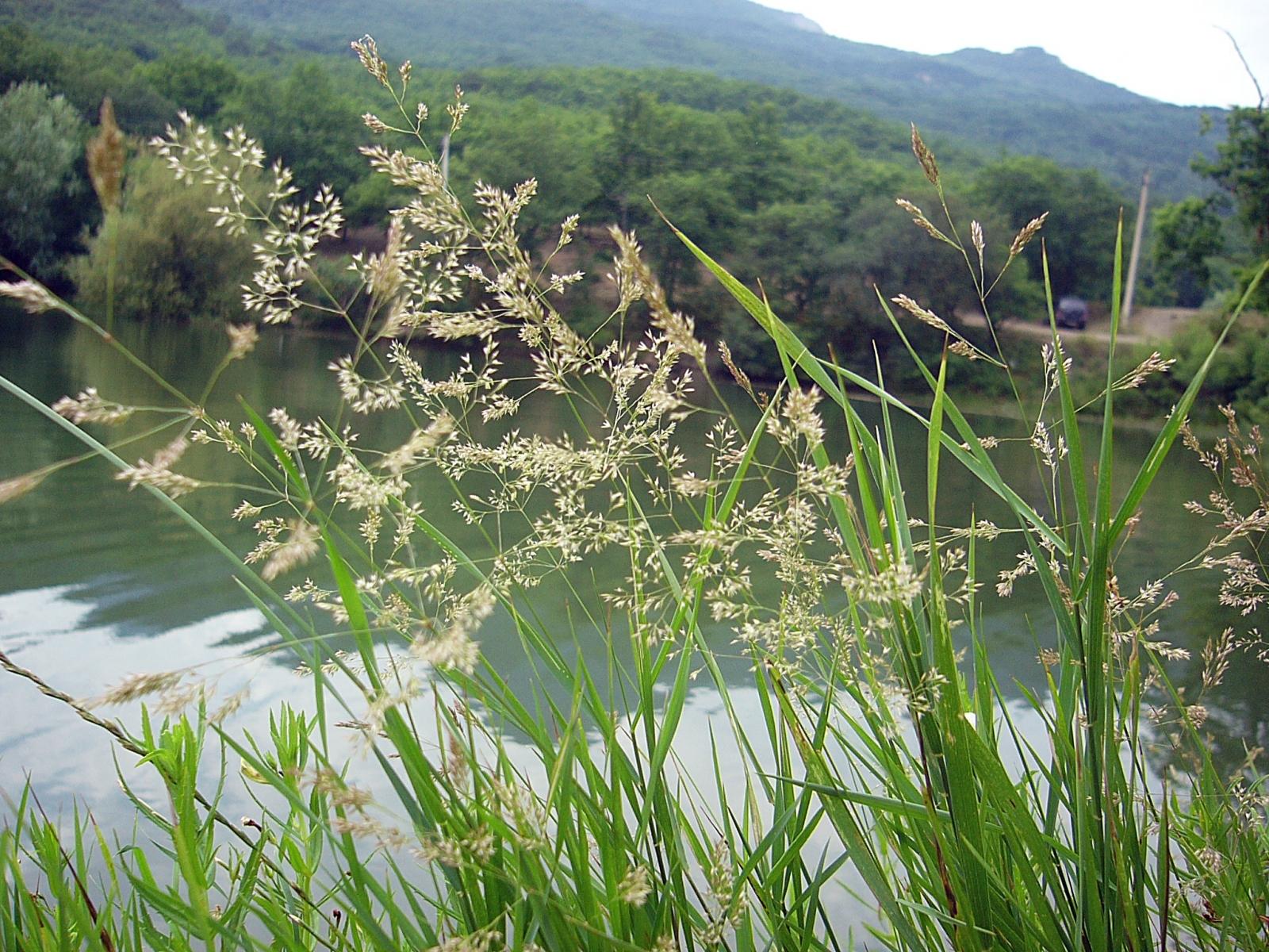 2789 скачать обои Растения, Река, Трава - заставки и картинки бесплатно