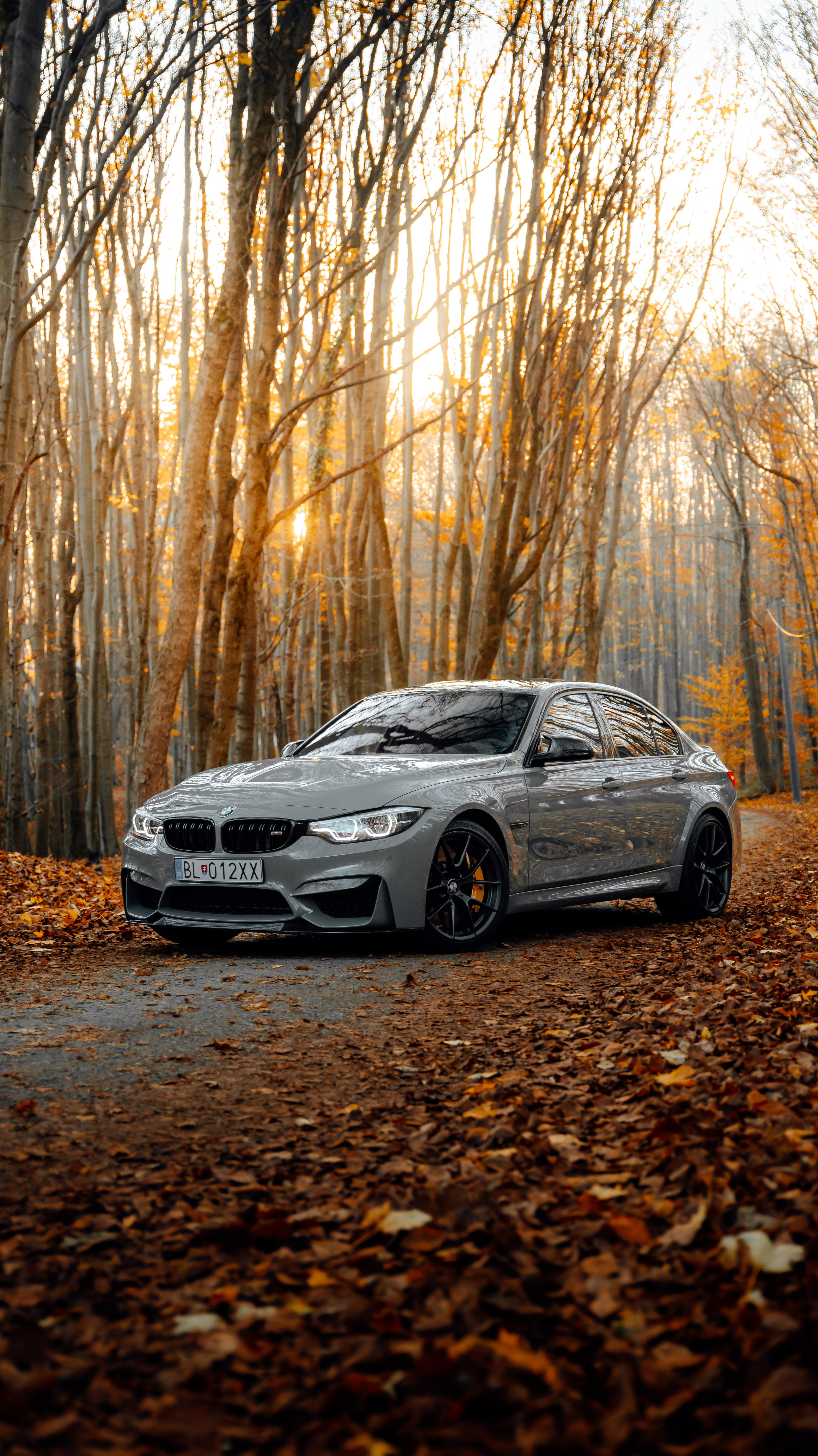 122065 скачать обои Бмв (Bmw), Осень, Вид Сбоку, Тачки (Cars), Автомобиль, Bmw M3, Лес, Серый - заставки и картинки бесплатно