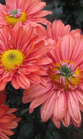 46185 descargar fondo de pantalla Plantas, Flores: protectores de pantalla e imágenes gratis