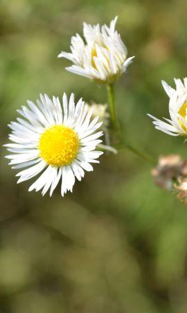 43076 télécharger le fond d'écran Plantes, Fleurs - économiseurs d'écran et images gratuitement