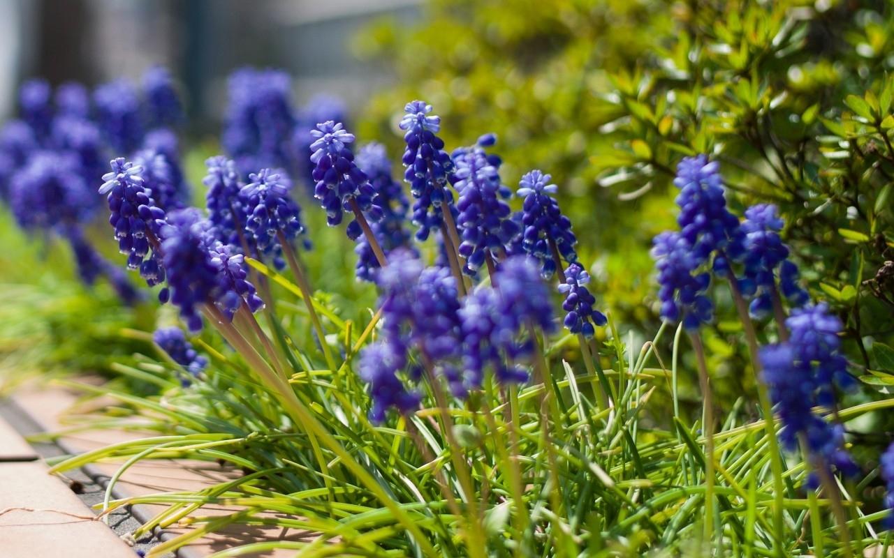 20172 скачать обои Растения, Цветы, Трава - заставки и картинки бесплатно