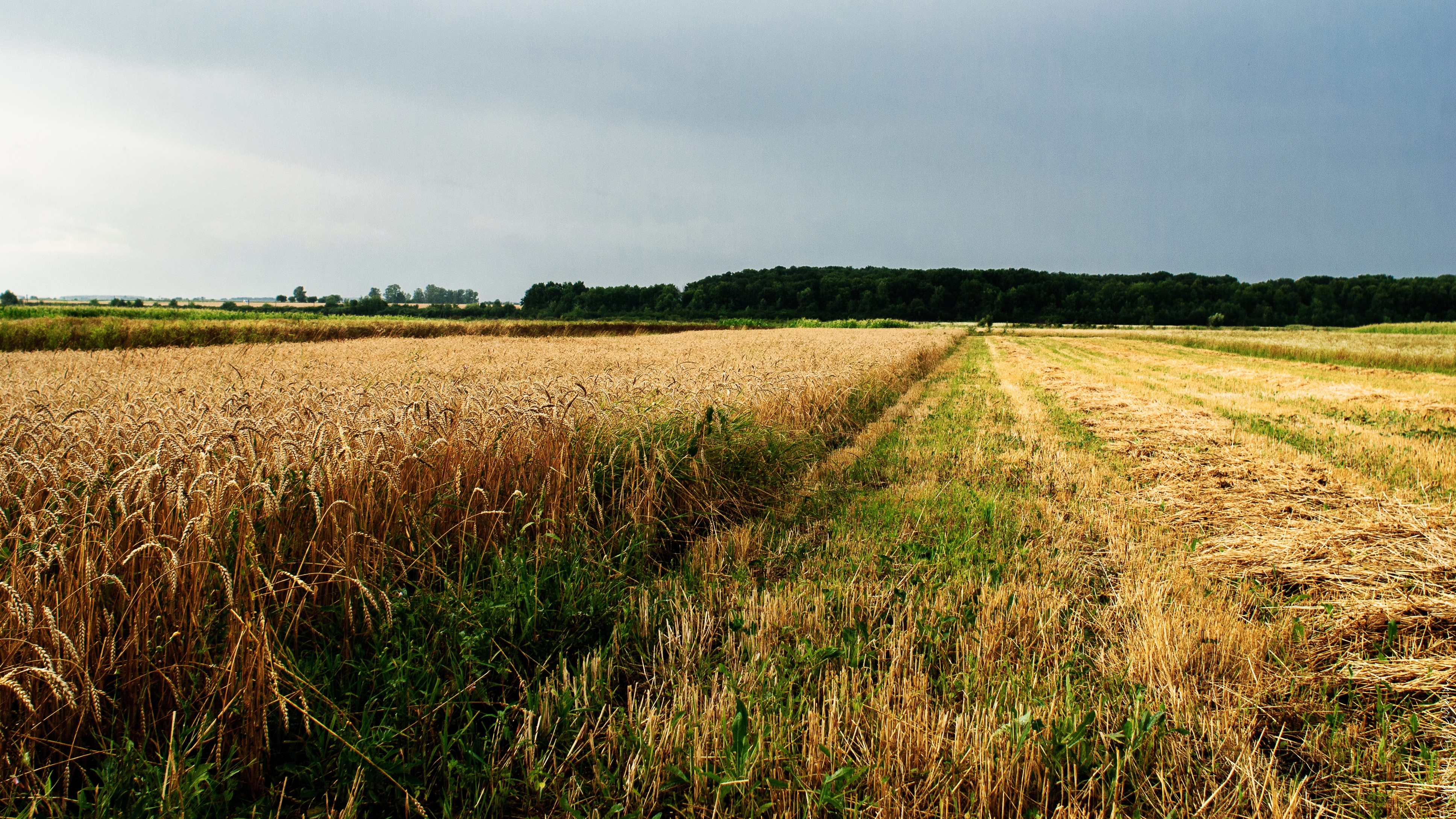 144979 Screensavers and Wallpapers Agriculture for phone. Download Nature, Field, Ukraine, Agriculture pictures for free