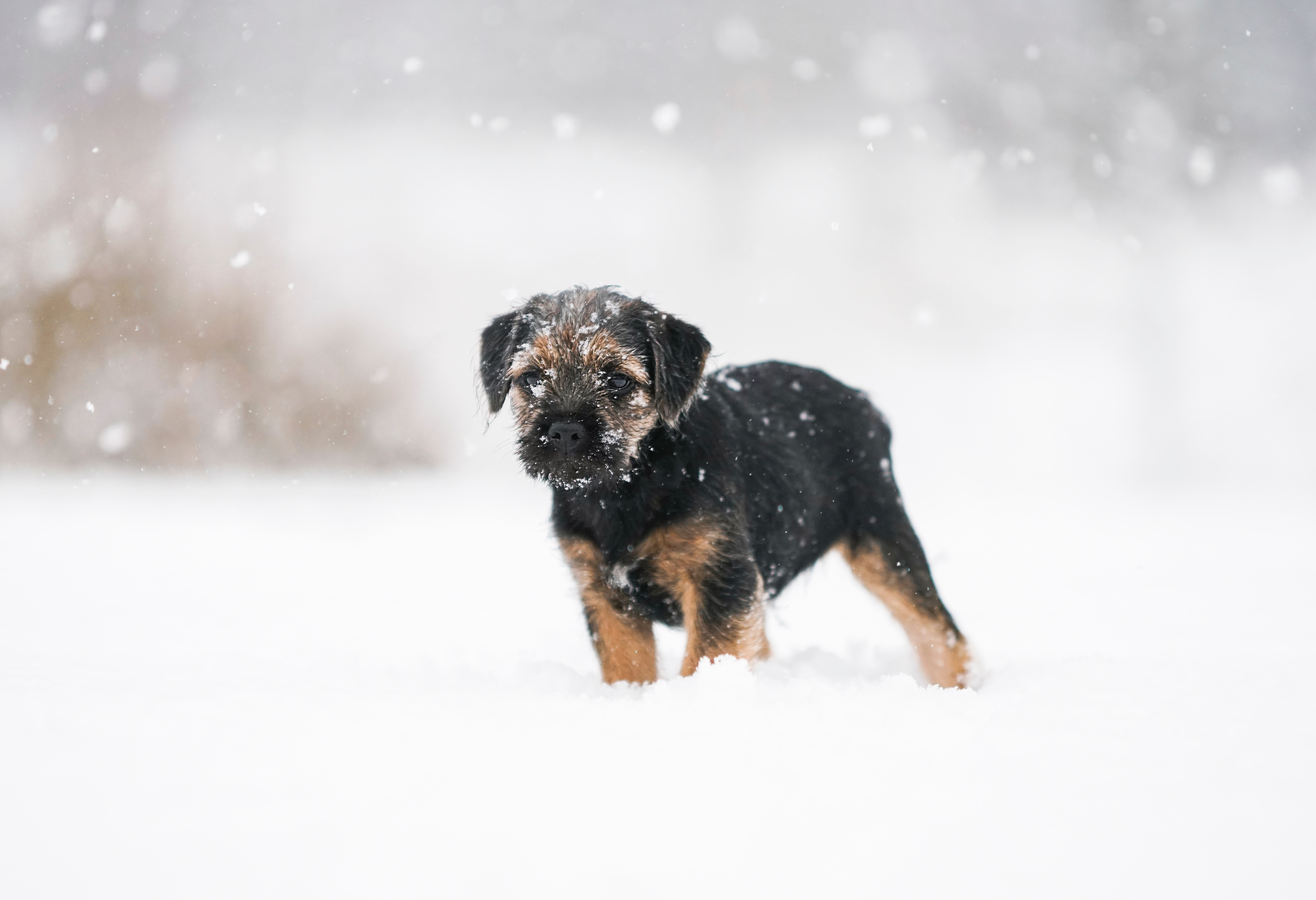 72678 Screensavers and Wallpapers Pet for phone. Download Animals, Puppy, Dog, Snow, Pet pictures for free