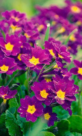 16730 descargar fondo de pantalla Plantas, Flores: protectores de pantalla e imágenes gratis