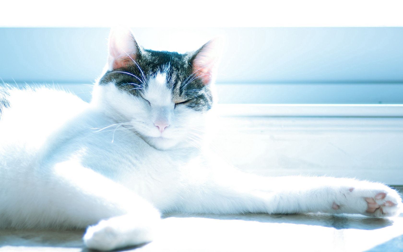 127878 download wallpaper Animals, Cat, To Lie Down, Lie, Shine, Light, Sight, Opinion screensavers and pictures for free