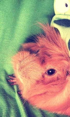 25105 baixar papel de parede Animais, Hamsters - protetores de tela e imagens gratuitamente