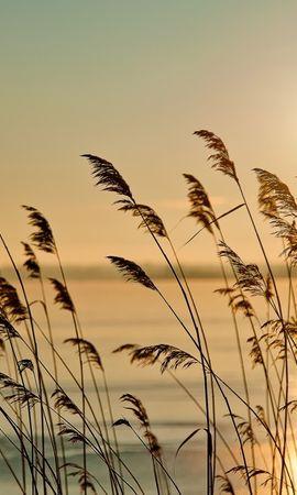 16662 скачать обои Пейзаж, Вода, Закат, Пшеница - заставки и картинки бесплатно