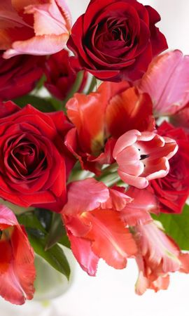 5100 скачать обои Праздники, Растения, Цветы, Розы, Открытки - заставки и картинки бесплатно
