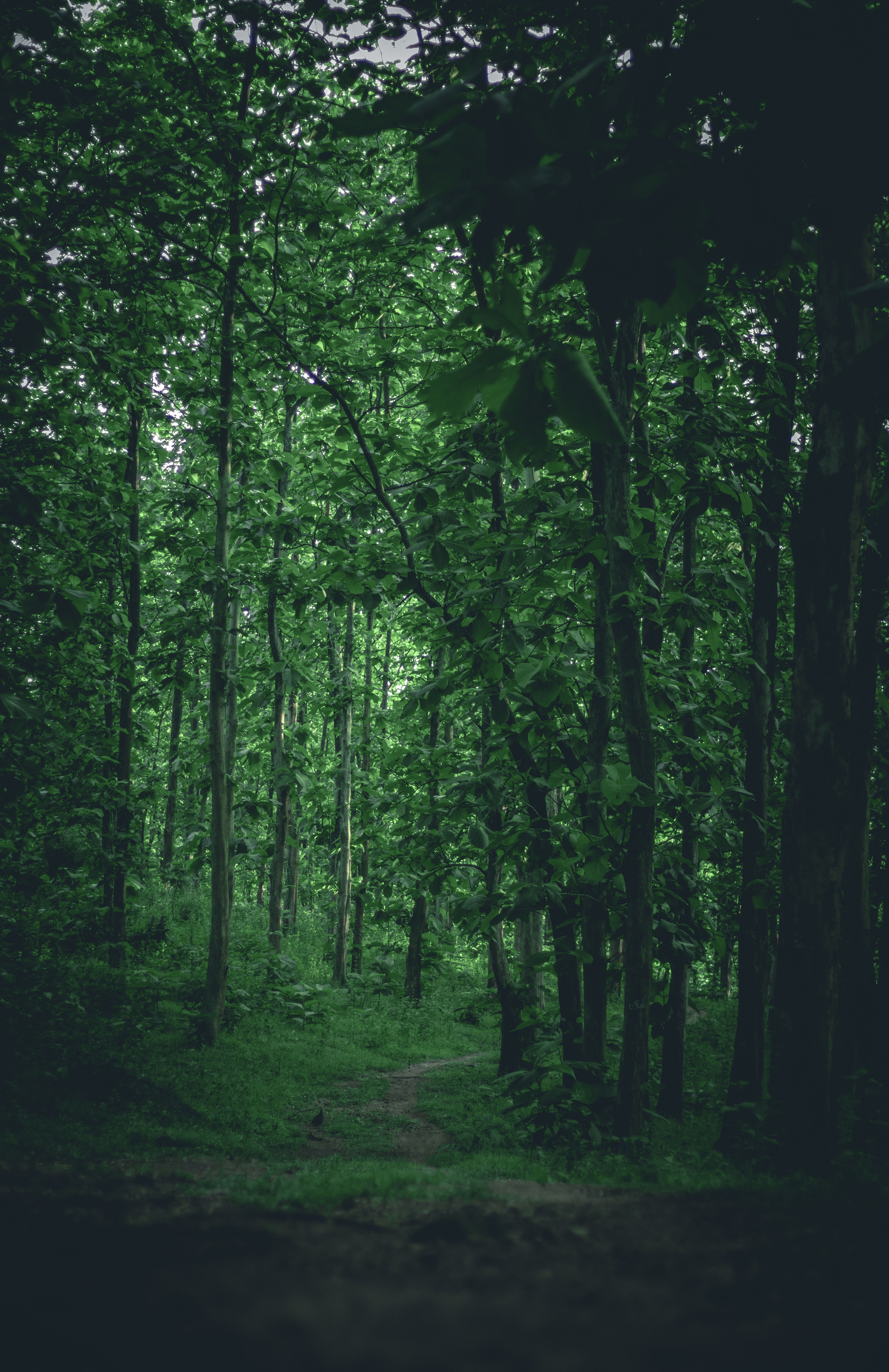 95275 download wallpaper Nature, Trees, Grass, Forest, Branches, Path screensavers and pictures for free