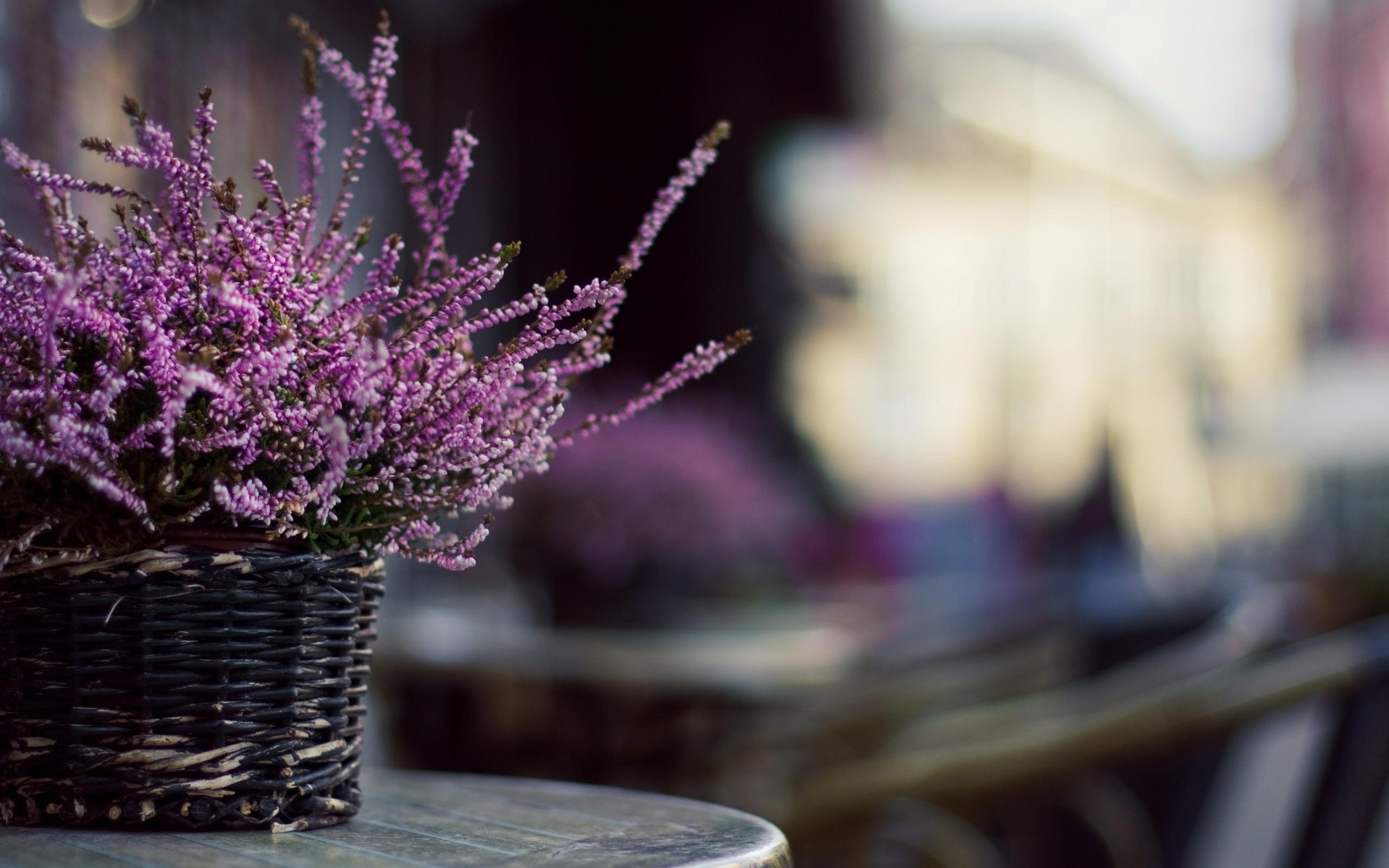 29174 скачать обои Растения, Цветы, Букеты - заставки и картинки бесплатно