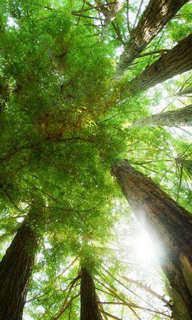41938 descargar fondo de pantalla Paisaje, Naturaleza, Árboles: protectores de pantalla e imágenes gratis
