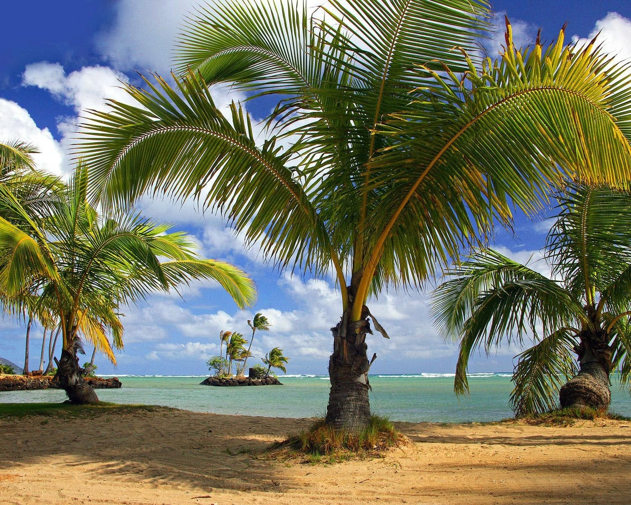 1583 download wallpaper Landscape, Trees, Beach, Palms screensavers and pictures for free